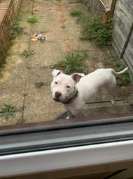 Loki waits outside for Lola to come and play