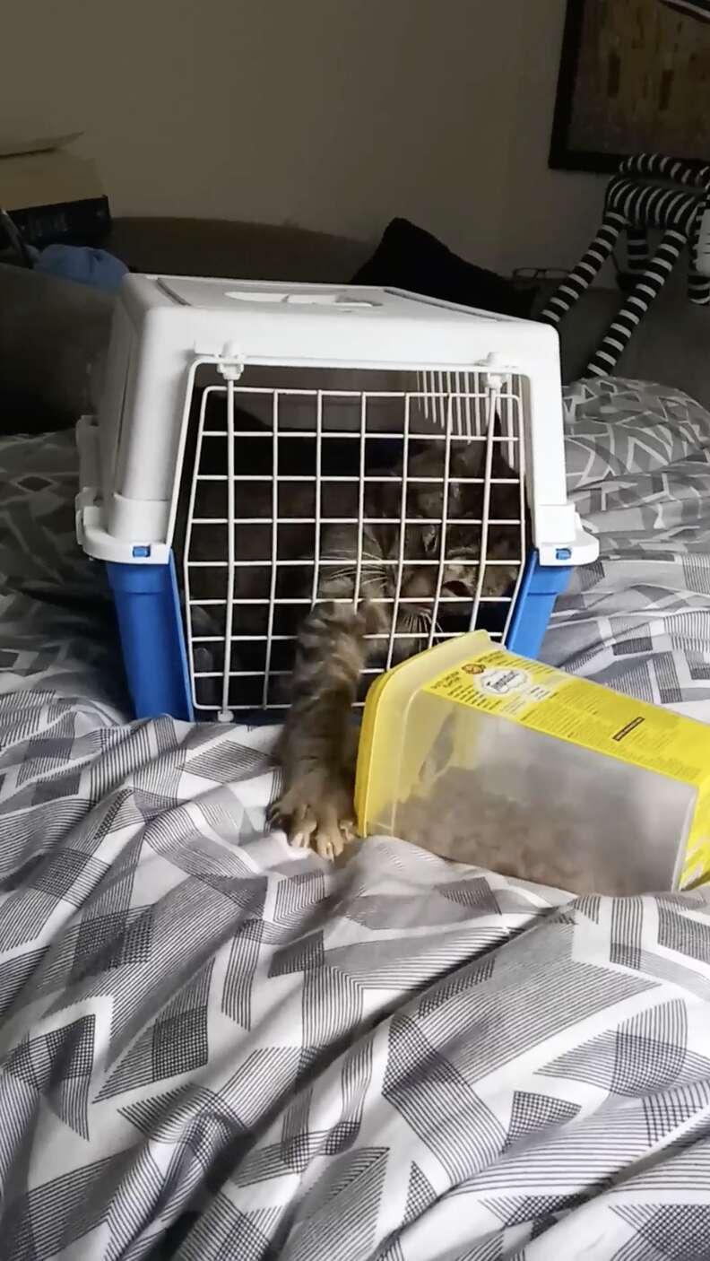 nursing home cat