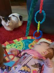 cat plays with baby toys