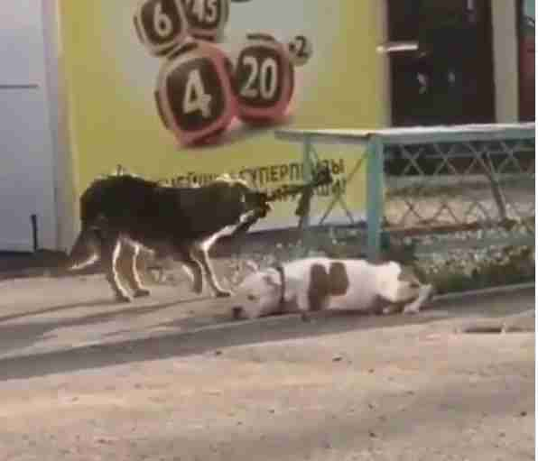 Kindhearted Stray Dog Sees A Pup Tied Up — And Works To Set Him Free
