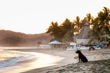 Sunset dogs of the increasingly boho Sayulita.