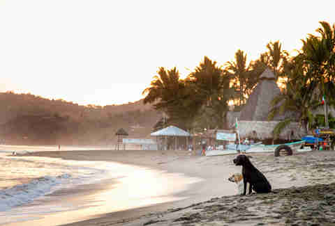 Sunset dogs of the increasingly boho Sayulita.