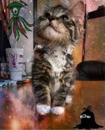 area 51 kitten