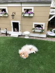 Dogs enjoying their backyard mansion