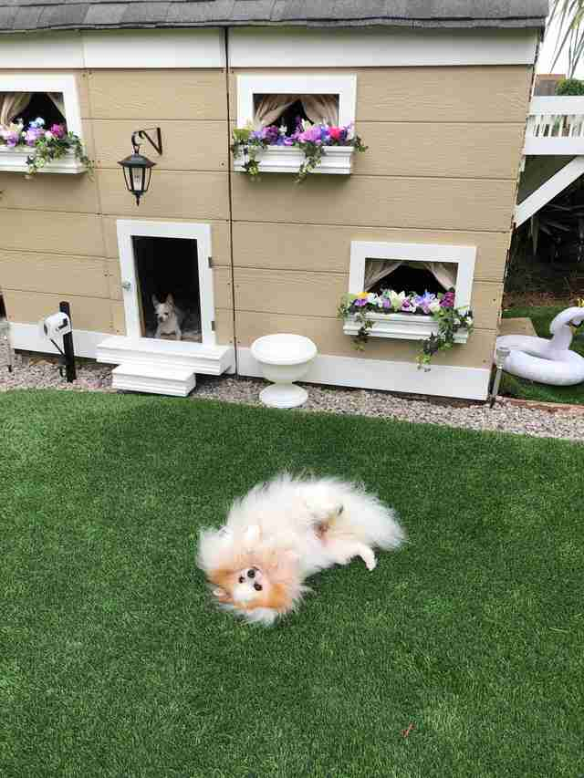 Dream House For Her Dogs