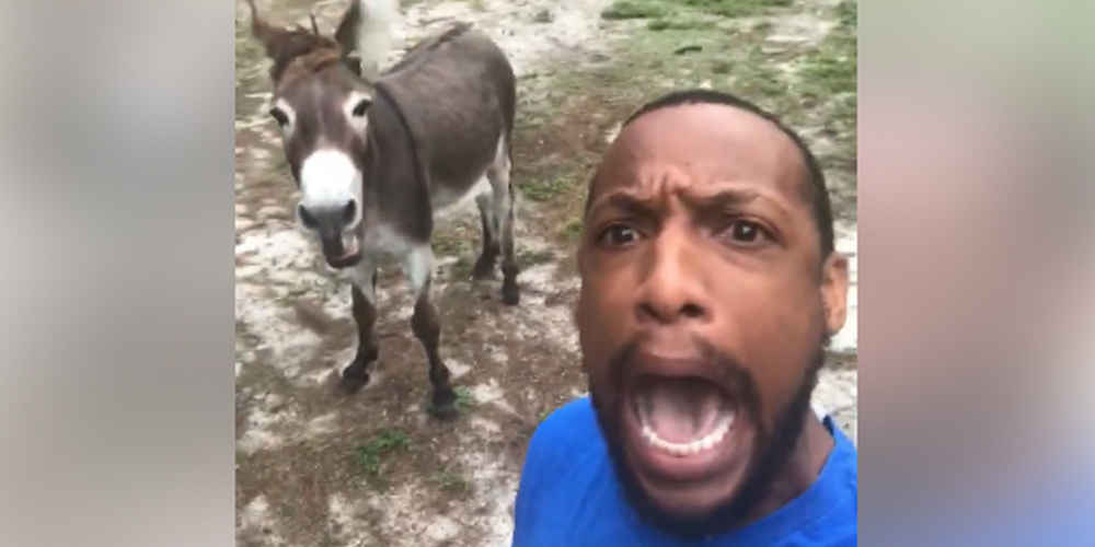 Donkey Joins Man For Hilarious Rendition Of 'Lion King' Song