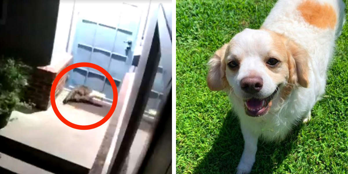 Dog Wakes Family To Let Them Know There's Someone Outside Asking For Help