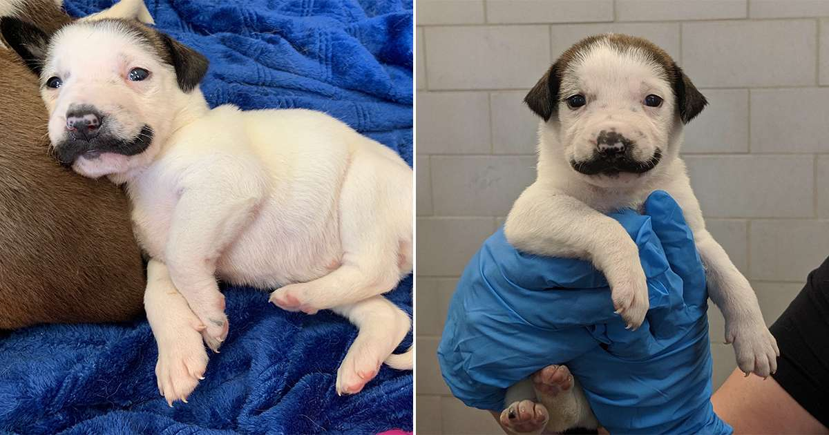 This Shelter Puppy Was Born With The Cutest Handlebar Mustache