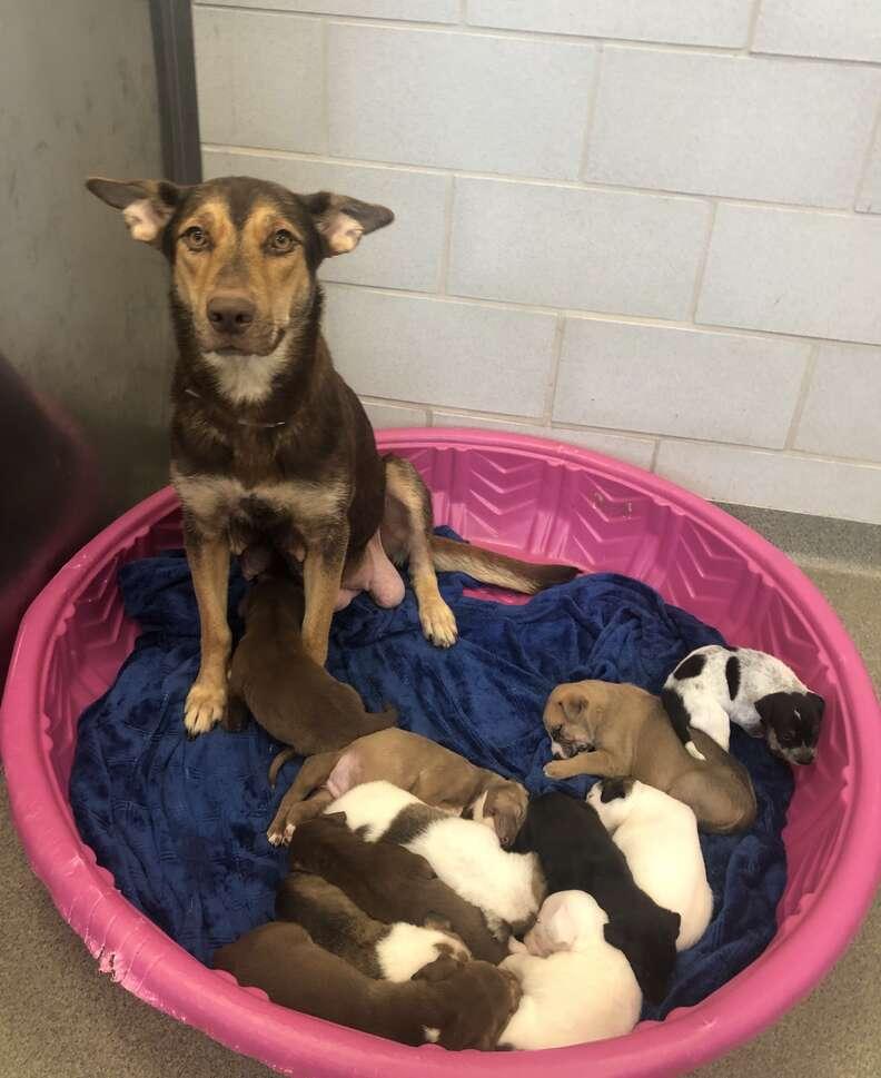 Mustache puppy's family at Dallas Animal Services