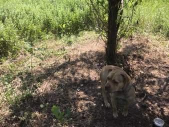 dog tied to tree