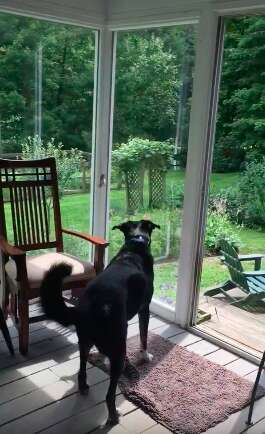 Gus the dog captures a trapped bird