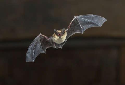 A Bat Got Loose on a Spirit Airlines Flight - Thrillist