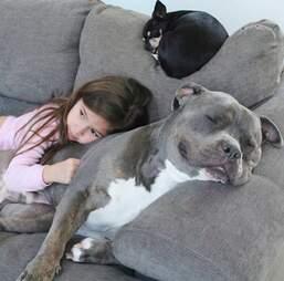 Scarlett naps with her pit bull Lebowski