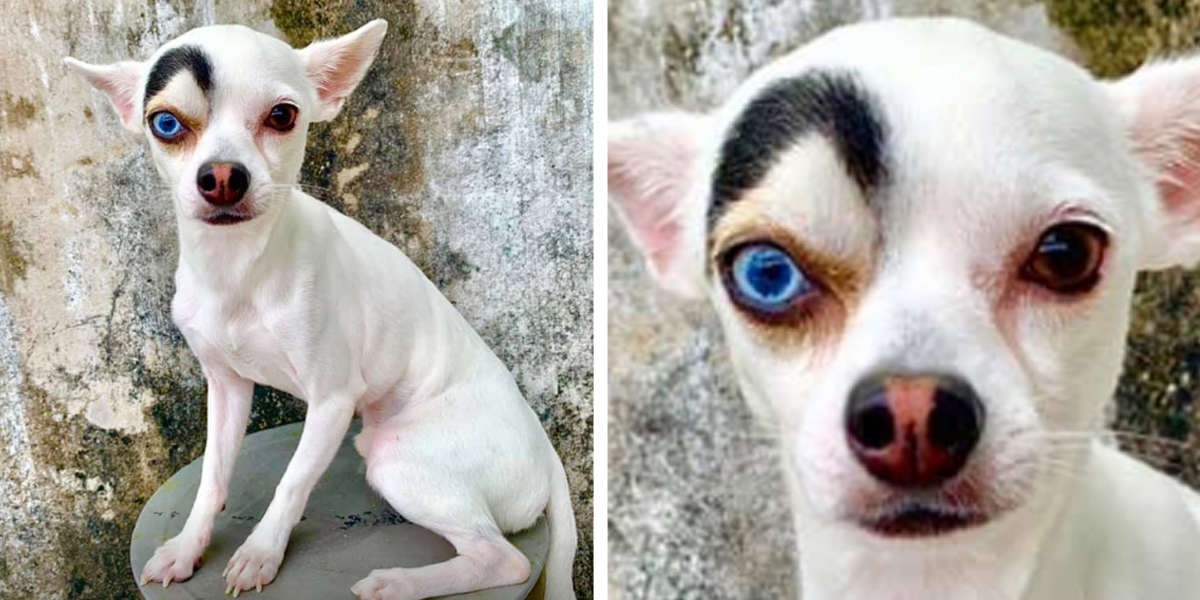 People Just Can't Get Enough Of This Adorably Unique-Looking Dog