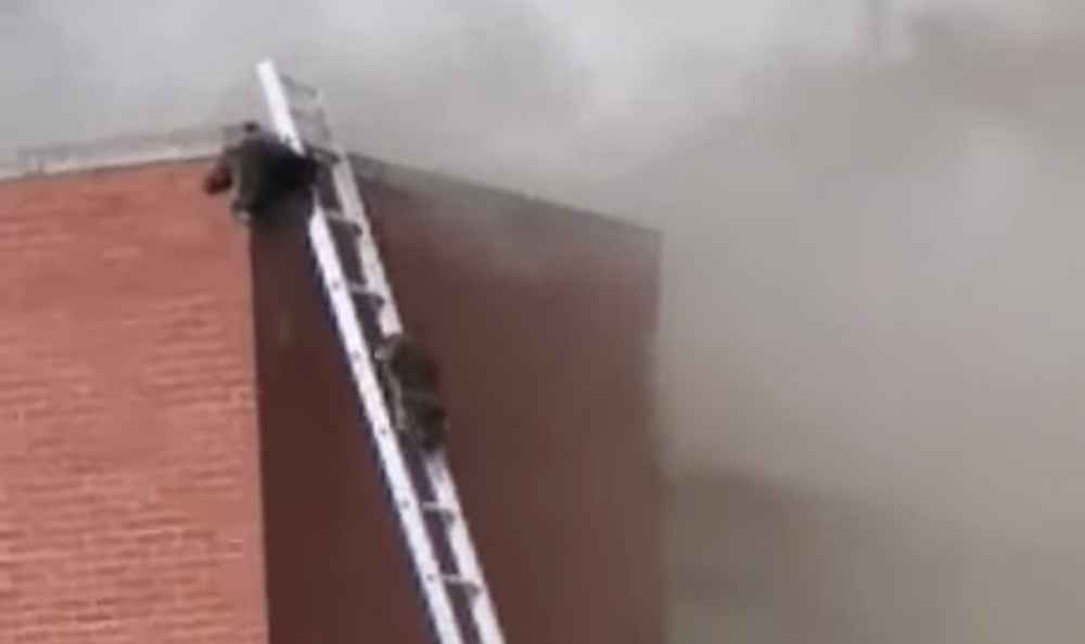 Firefighters Set up Ladders to Rescue Precious Raccoons from Warehouse Fire