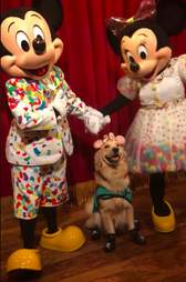 Nala the service dog with Mickey Mouse