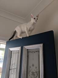 kitten paints house