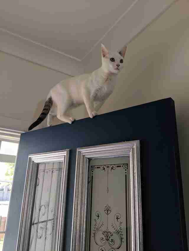 Kitten Finds Tray Of Paint And Decides To Redecorate The House