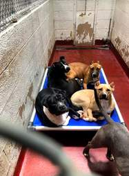 Dogs snooze in overcrowded kennel