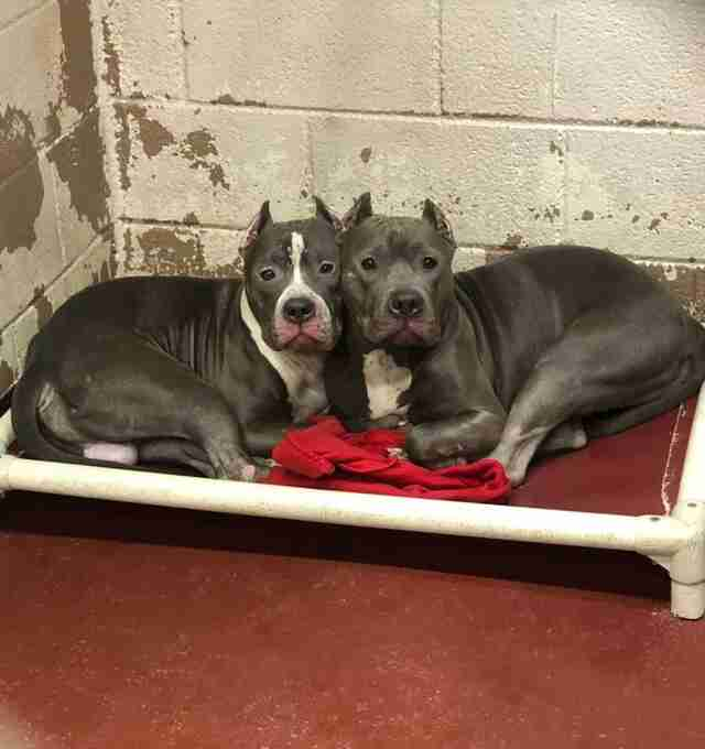 Bonded dogs at Fulton County Animal Services