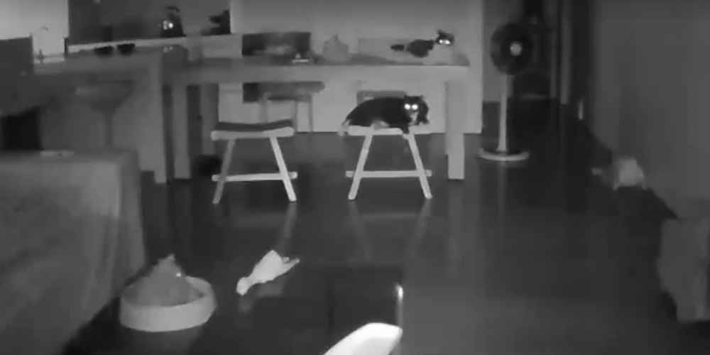 Kitty-Cam Shows Group Of Cats Reacting To An Earthquake