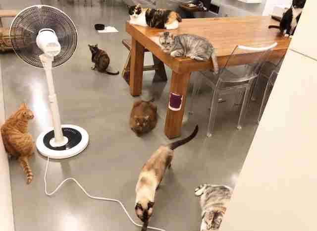 kitty lea cam show