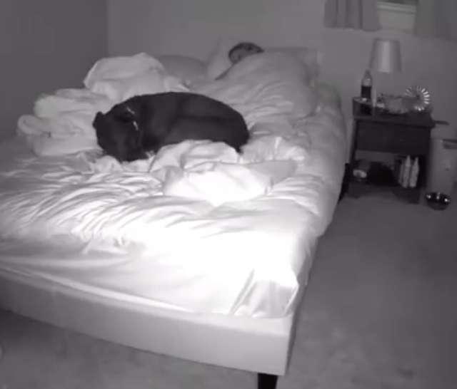 影/她跟狗狗一起睡覺卻總是「不斷醒過來」!怒設攝影機偷拍...卻發現「心碎真相」