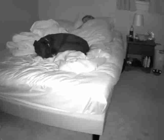Woman films herself sharing a bed with her dog