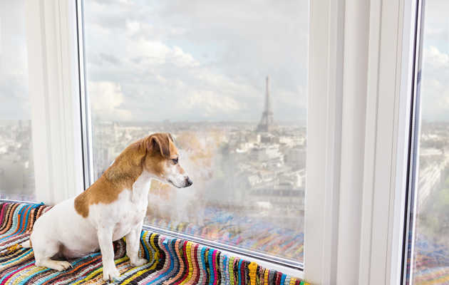 This Travel Site Wants to Hire Your Dog As a Pet-Friendly Hotel Reviewer