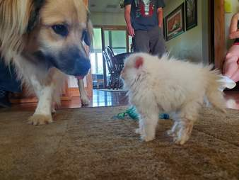 Nimbus the kitten proves how brave she is meeting new animals