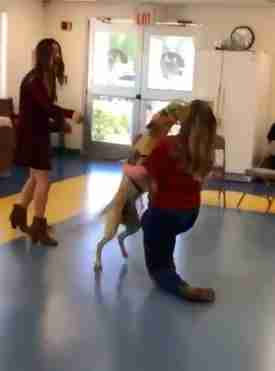 Elijah the service dog reunites with his trainer