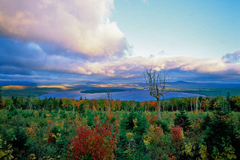 Height of Land Moose Lookmeguntic Lake