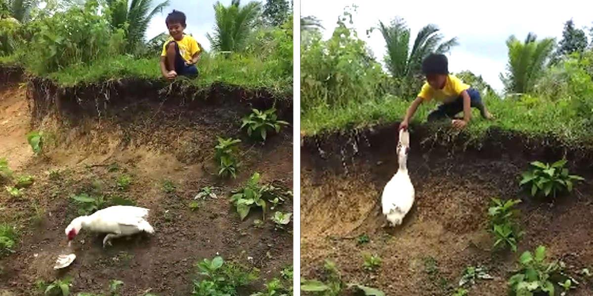 Nice Duck Returns Boy's Flip-Flop That Fell Down A Hill