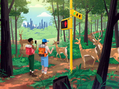 illustration with deer, hikers, trees, and chicago skyline
