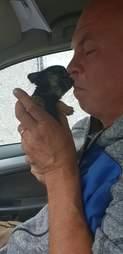 tiny rescue puppy