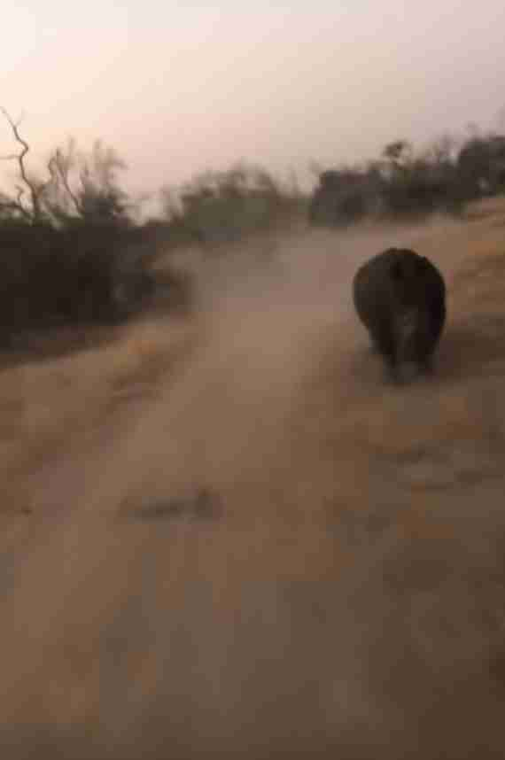 Group Of Tourists Suddenly Realizes Someone Is Chasing Them