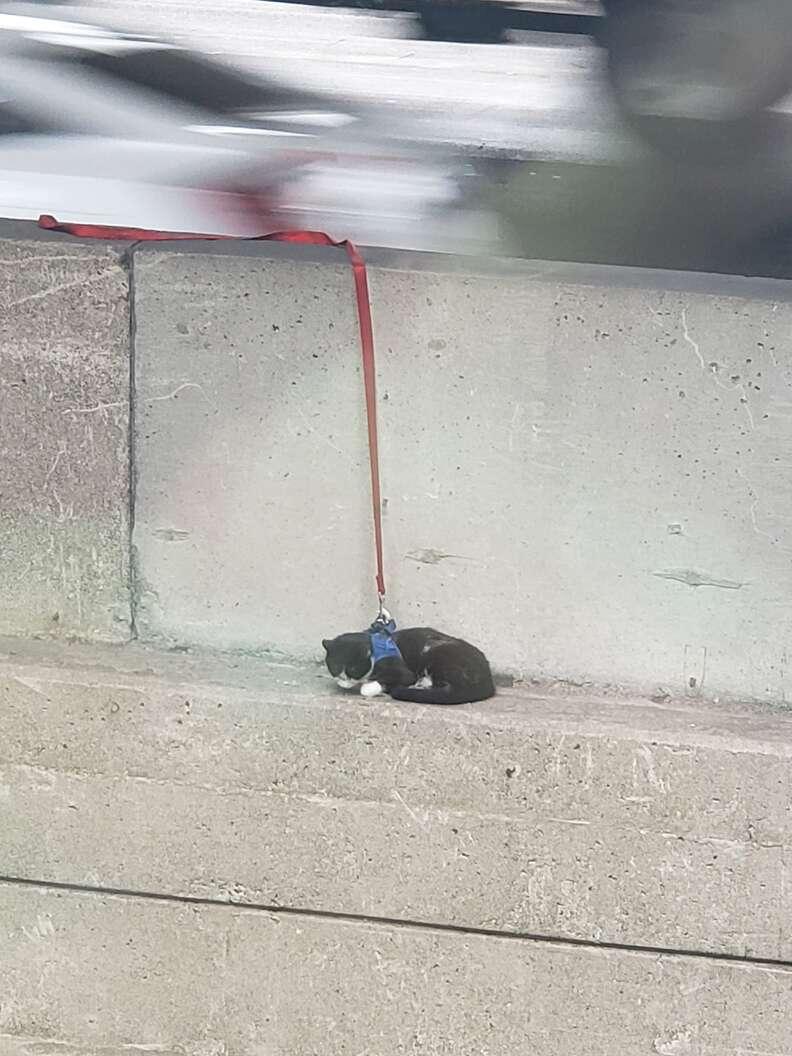 cat stuck on bridge