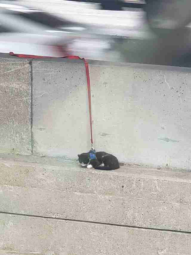 cat stuck on bridge
