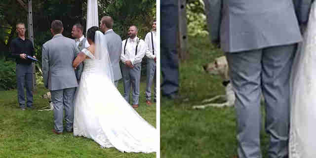 Dog Unexpectedly Joins Parents For First Dance At Their Wedding