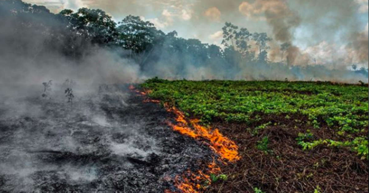 Here's How To Help Animals Affected By The Amazon Wildfires