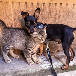 A stray kitten snuggles a puppy