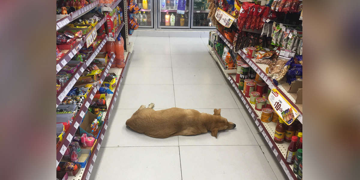 Nice Store Opens Its Doors To Homeless Dog During Heat Wave