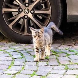 A stray kitten befriends a dog in Rome
