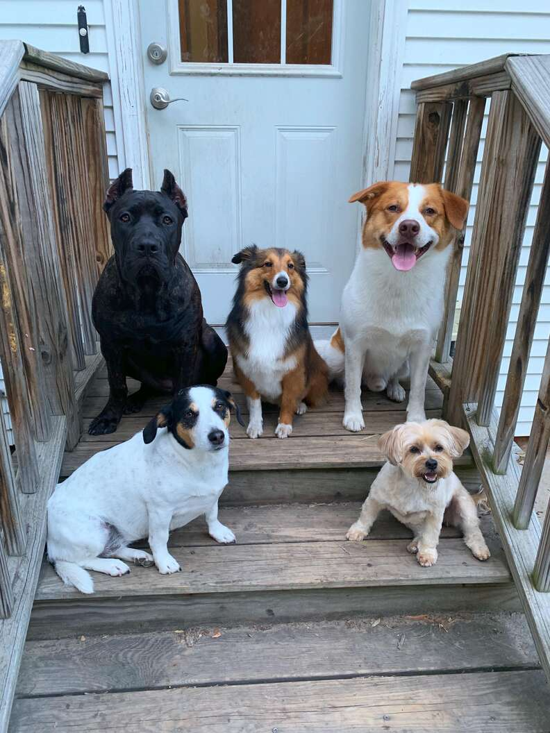 dogs watch mom
