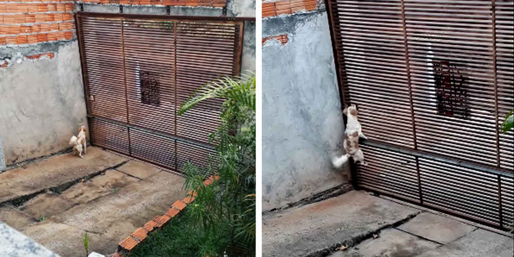 Woman Waits With Camera To Find Out How Her Dog Keeps Escaping