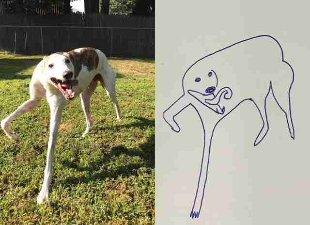 guy draws dog
