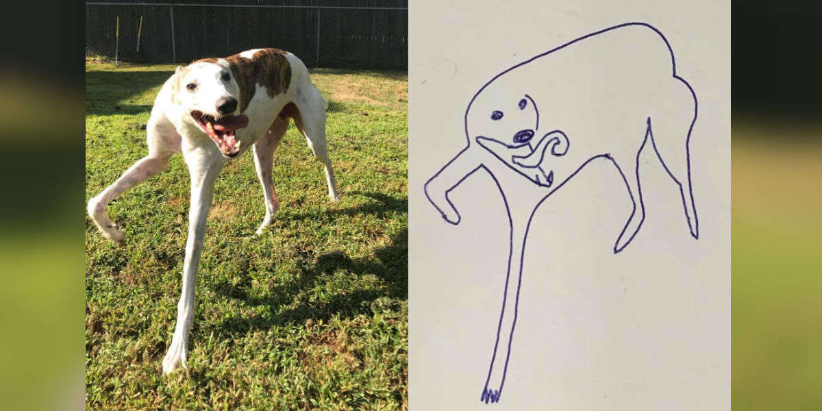 Guy Tries To Draw Pictures Of His Dog And Totally Nails It