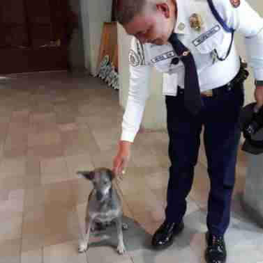 Mall security guard pets stray dog