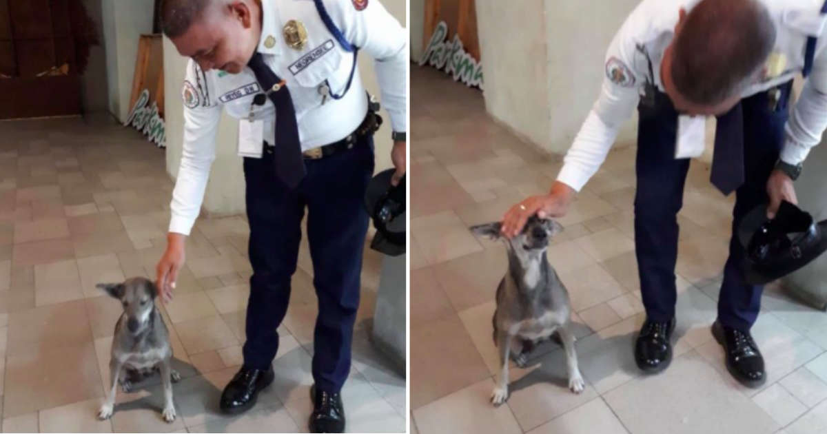 Stray Dog Follows Mall Security Guard Around Until He Adopts