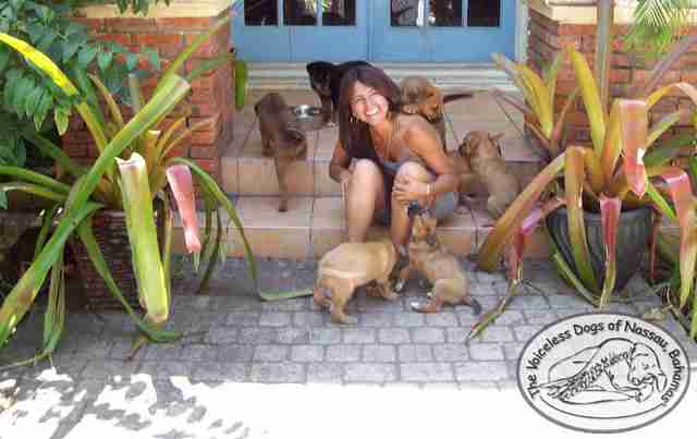 Woman In Bahamas Takes In 97 Stray Dogs And Saves Them All From Hurricane